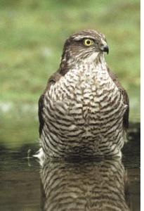 Image of a bird of prey